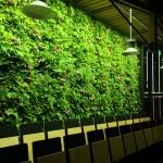 Green wall lighting in schools